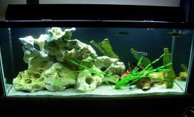 Аквариум торене растения