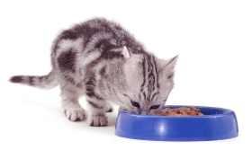 Храна при малки котки
