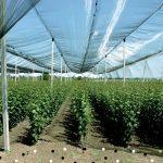 Бъдещето на овощните разсадници